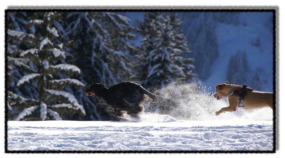 Winterliches Hundespiel