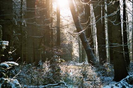 Winterliches Waldidyll