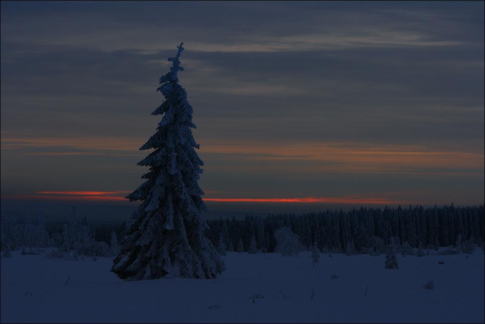~ Winterlich(t) ~