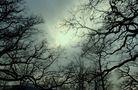 Winterlicht von SINA