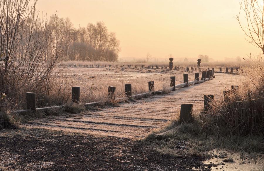 ~Winterlicht im Moor~