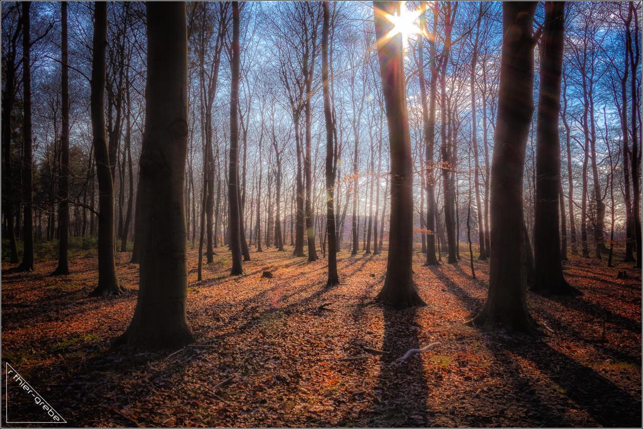 winterlicht - winter light