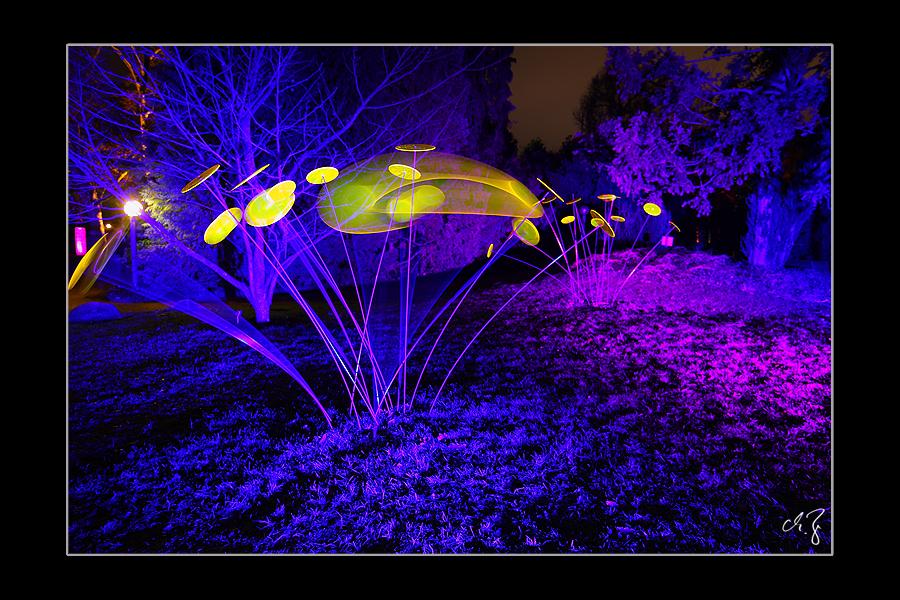 Winterlichter (1)