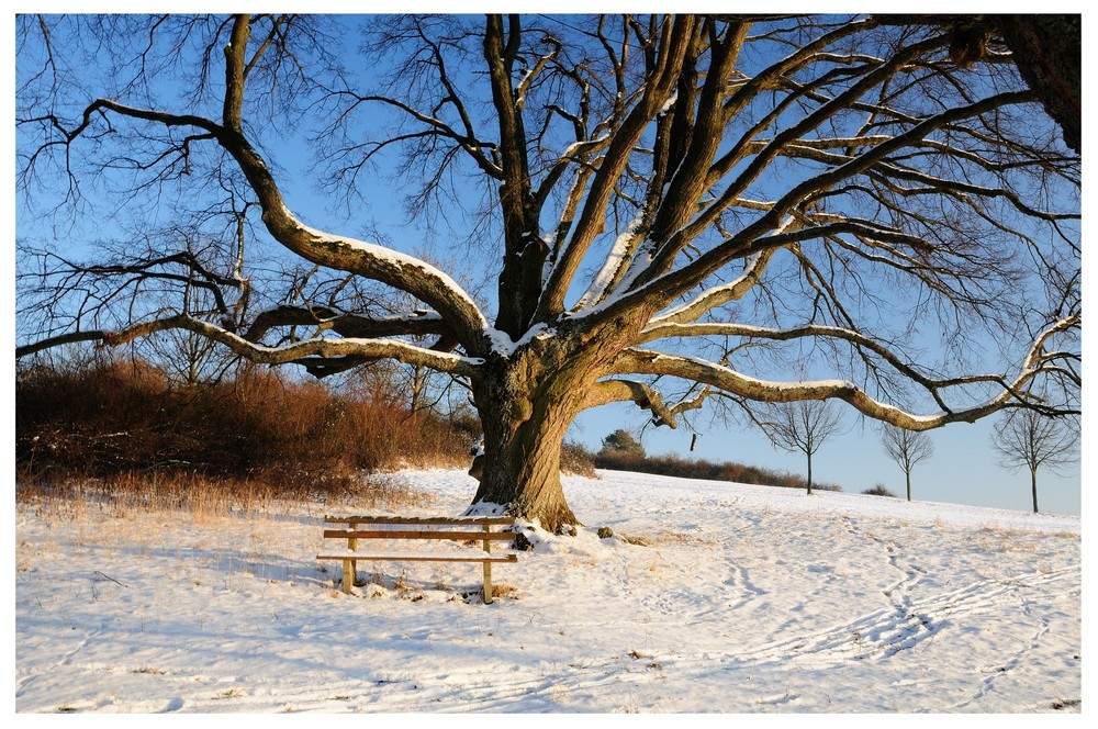 winterlight views (4)