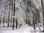 Wintermacht - Winternacht