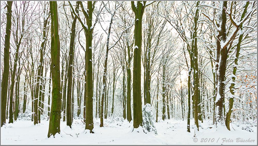Wintermärchen (1)