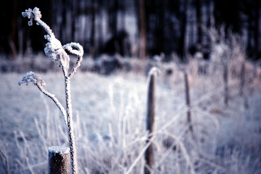 * Wintermärchen*