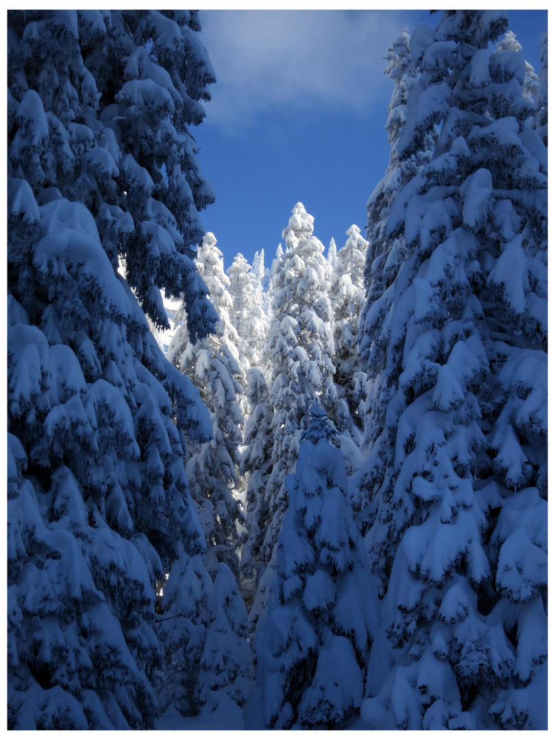 Wintermärchen I
