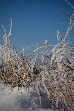 Wintermärchen im Rheinland #1