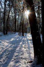 Wintermärchen im Rheinland #3