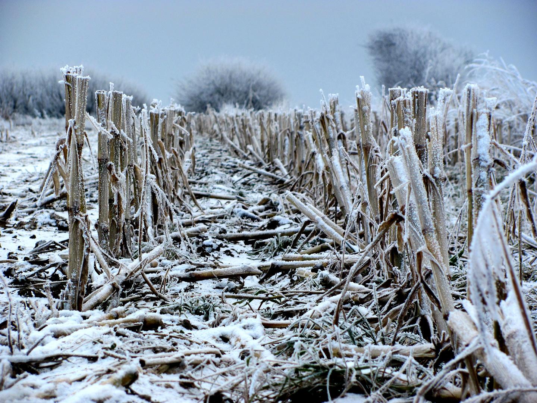 """""""Wintermais"""""""