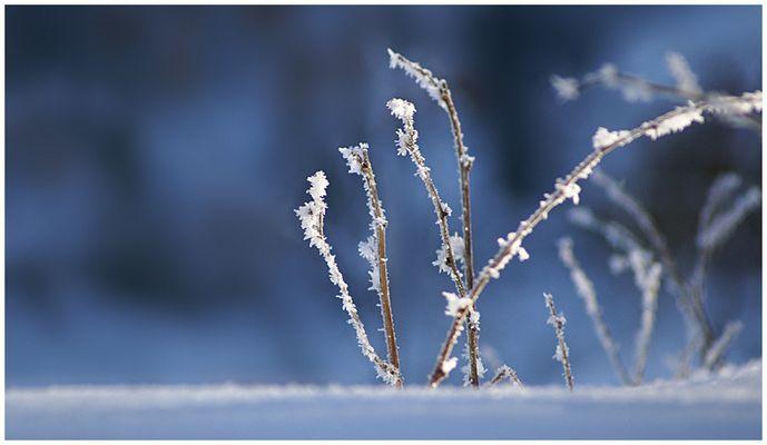 Wintermakro