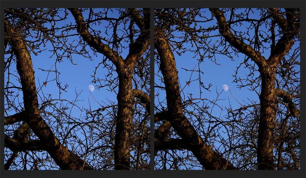 Wintermond im alten Apfelbaum