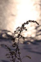 Wintermorgen 01