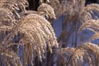 Wintermorgen 03