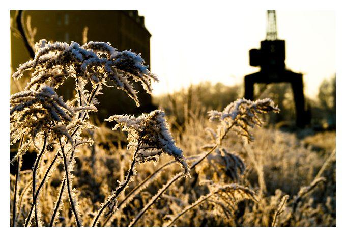 Wintermorgen [1]
