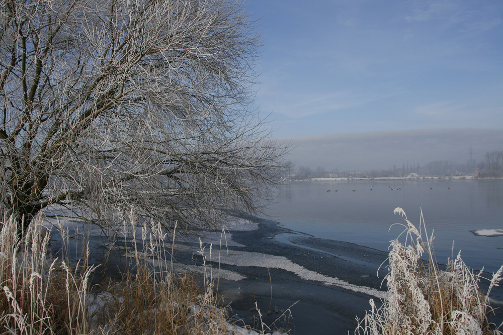 Wintermorgen an der Elbe