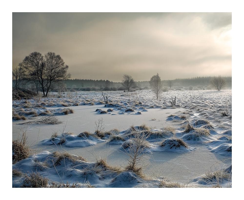 Wintermorgen im Brackvenn