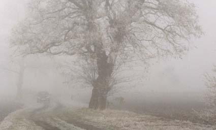 Wintermorgen im Nebel