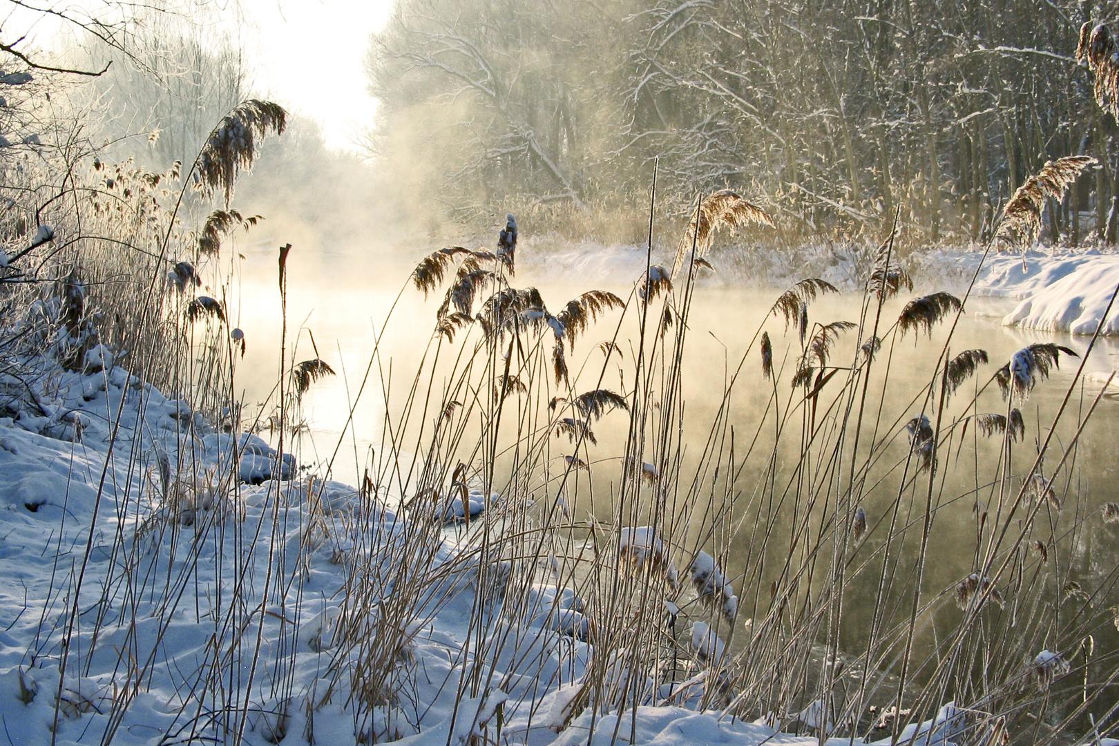 Wintermorgen in der Au