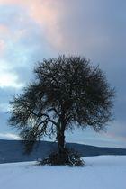 Wintermorgenbaum