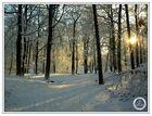wintermorgenspaziergang