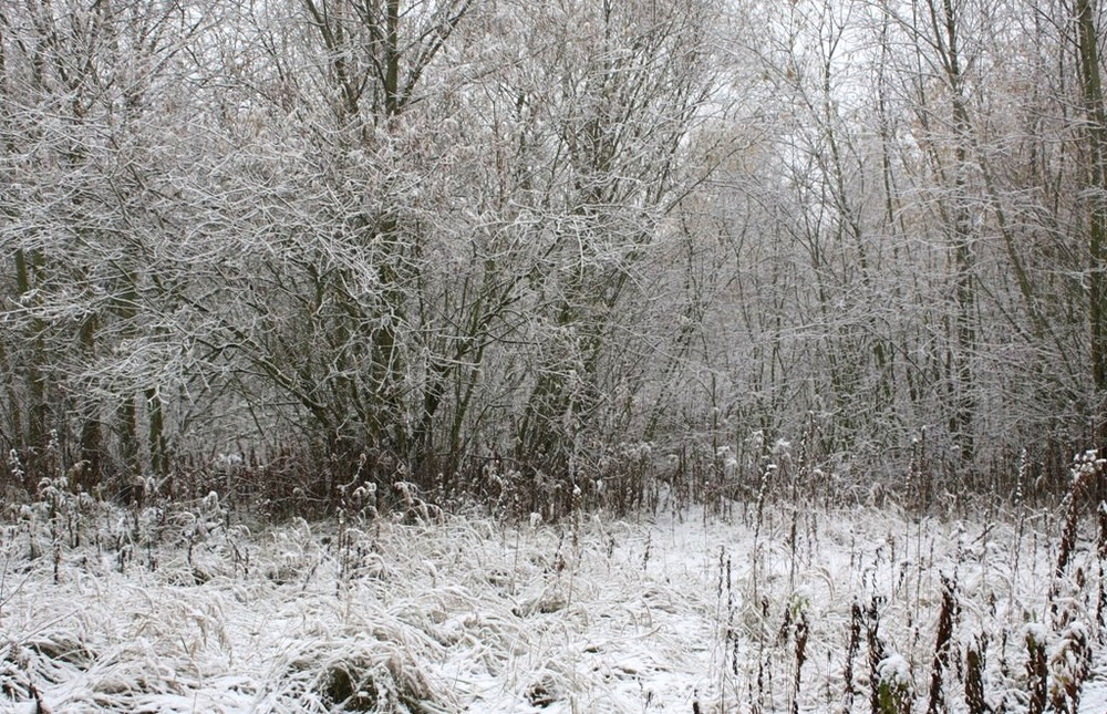Wintermotiv