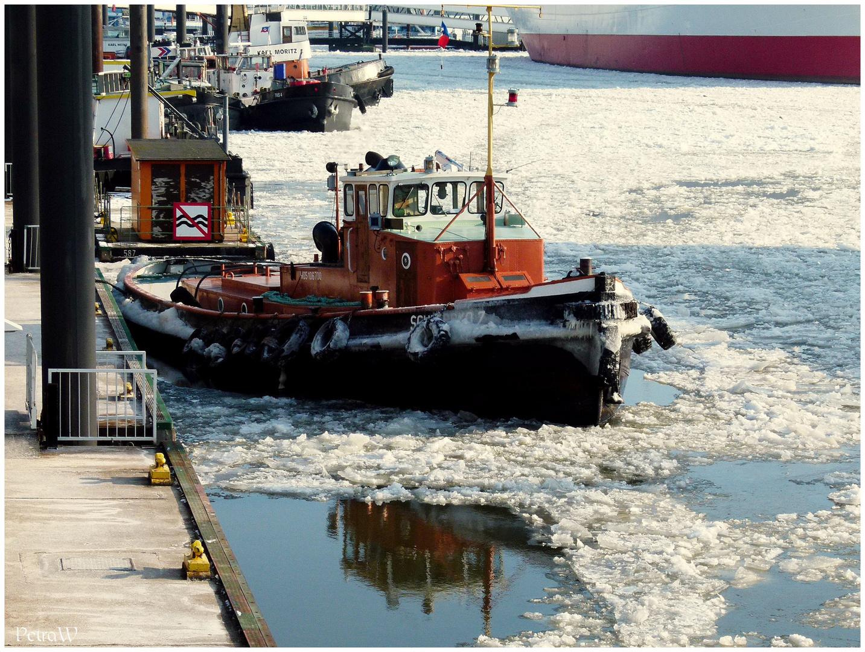 Winternachlese im Hamburger Hafen 4