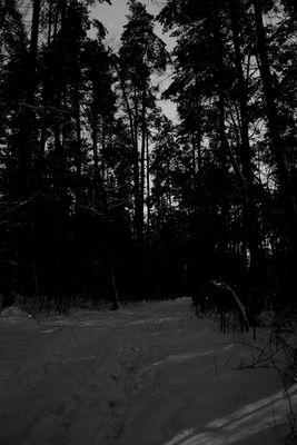 Winternacht im Wald