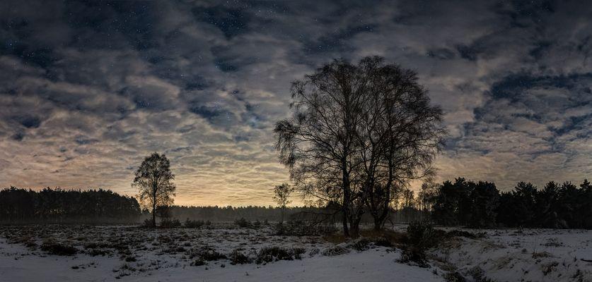 Winternacht in der Heide