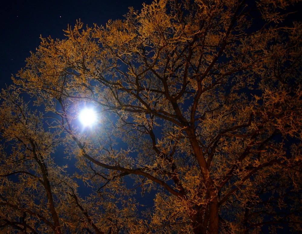 Winternacht IV