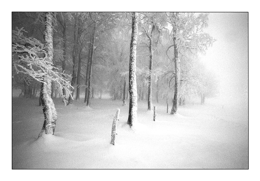 Winternebel 1