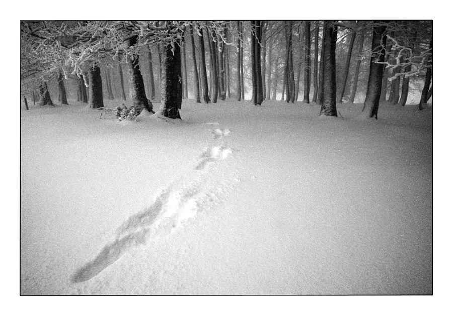 Winternebel 4
