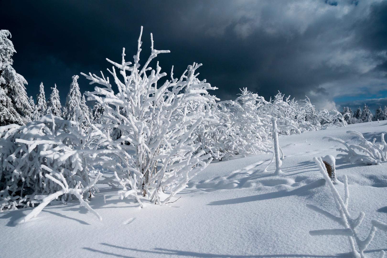 Winter...ohne Ende?