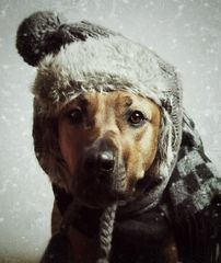 .....WinterPelz.....