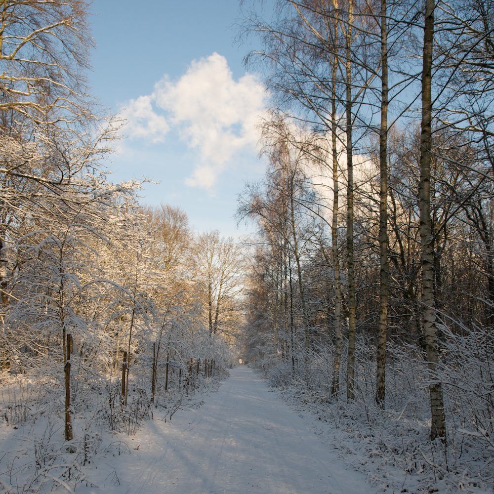 Winterplänterwald