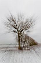 Winterrausch II