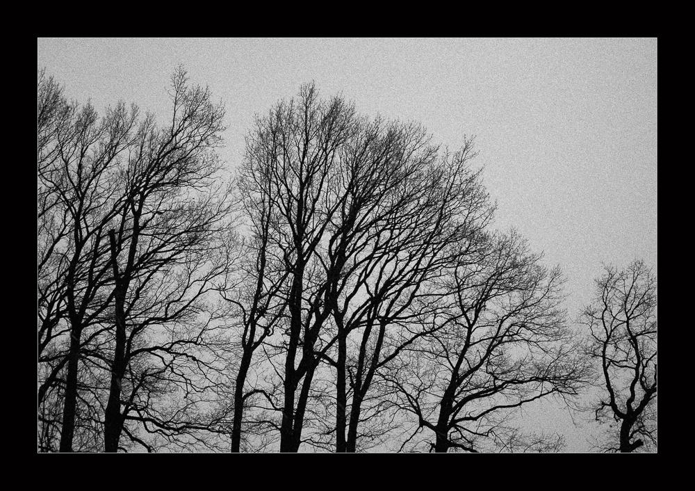 Winterrauschen B&W