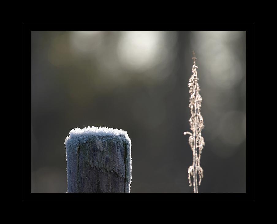 WinterReflektionen I