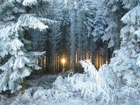 Winterritt im Taunus