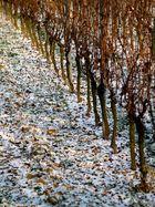 """""""Winterruhe""""..."""