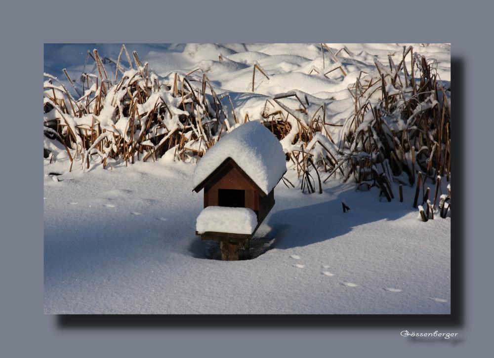 ~ Winterruhe am Ententeich ~