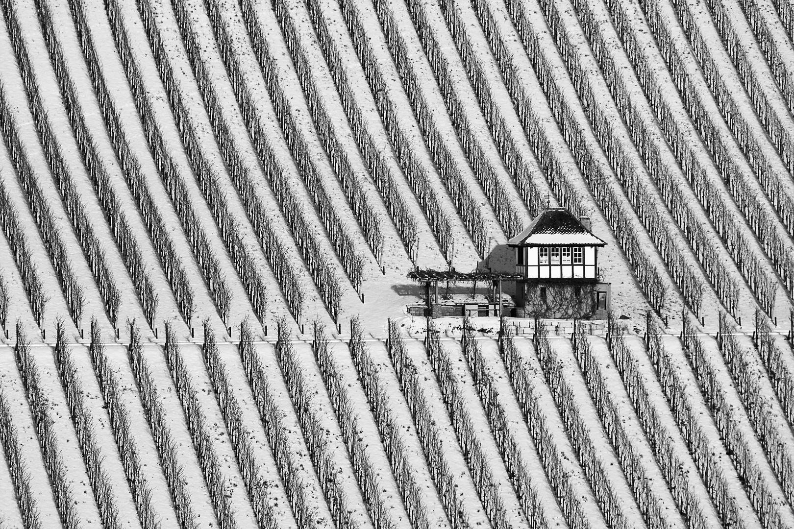Winterruhe im Rebberg