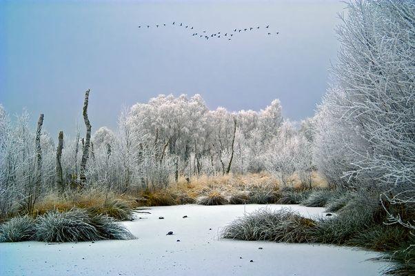 Winter's Tale in the Moor