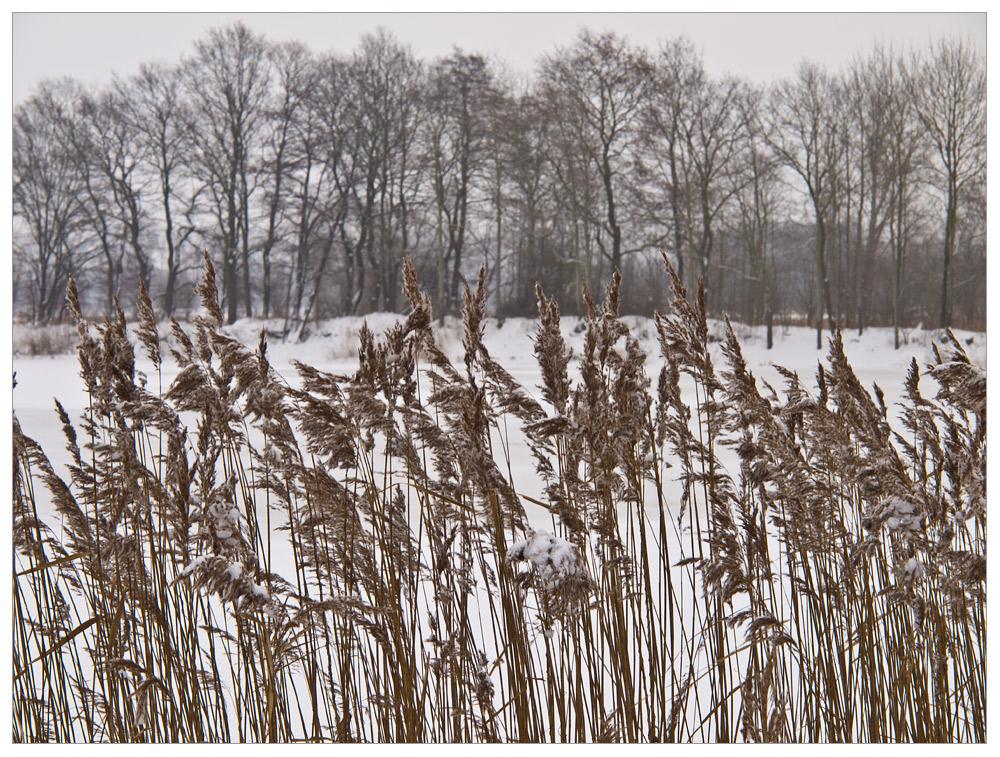 WinterSchilf