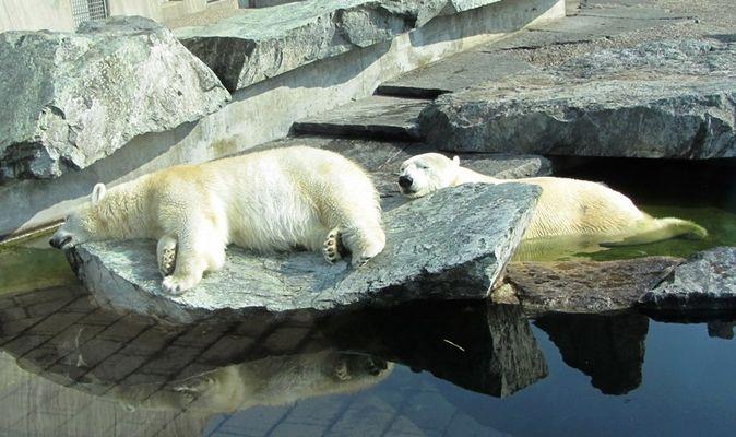 Winterschlaf vorbei und jetzt die Frühjahrsmüdigkeit :-)