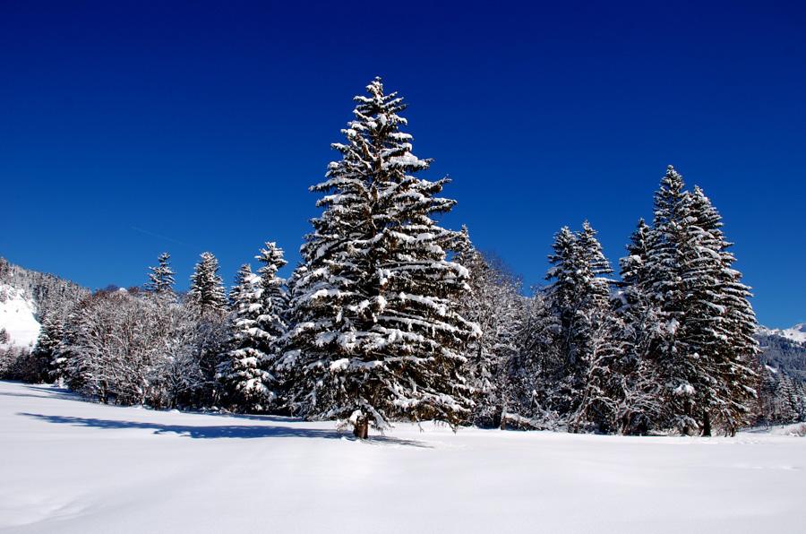 wintersnowland