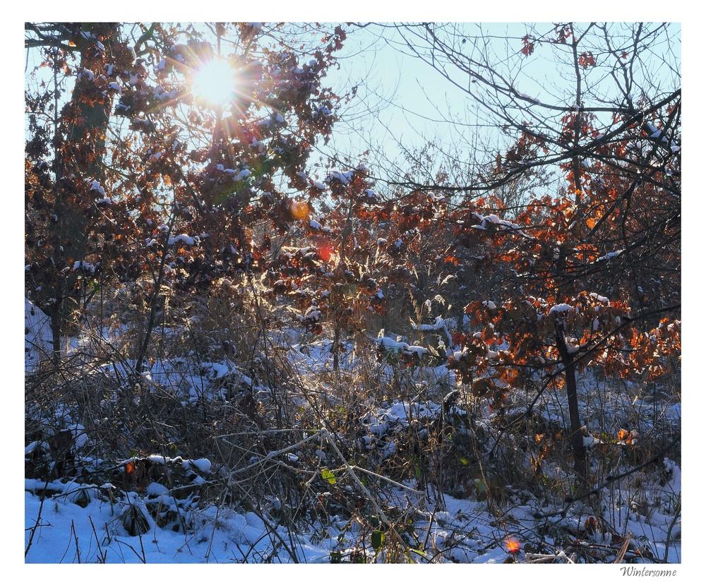 wintersonne (2)