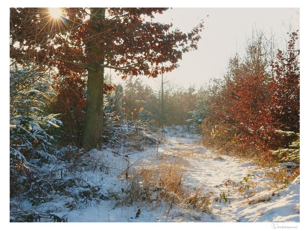 wintersonne (4)