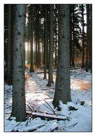 Wintersonne im Eifelwald
